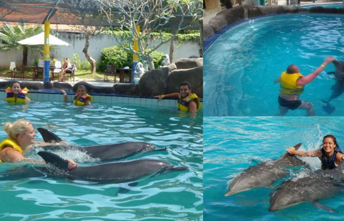 swim with dolphins bali