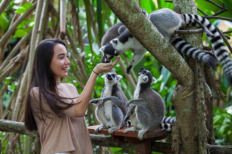 bali zoo animals conservation
